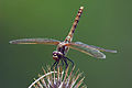 Northwest Wildlife 02 (6872904527) (2).jpg