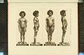 Nova Guinea - Vol 3 - Plate 34.jpg