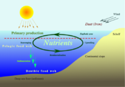 Nutrient cycle in the oceans.