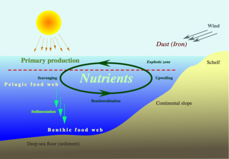 Ecologybiogeochemical cycles wikibooks open books for an open the nutrient cycle ccuart Images