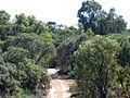 OIC tamala park 2006 bushland off connolly.jpg