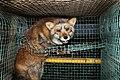 Oikeutta eläimille - Fur farming in Finland 07.jpg