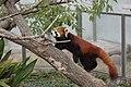 Oji zoo, Kobe, Japan (5384279236).jpg