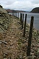Old Concrete Fence Posts - geograph.org.uk - 597274.jpg