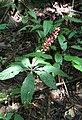 Overbridge rain forest (2720231582).jpg