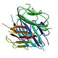 PBB Protein ADIPOQ image.jpg