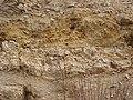 PP Miocenní sladkovodní vápence, stěna (004).jpg