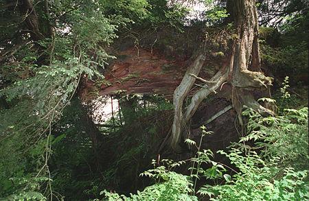Pacific Rain Forest Sitka(Alaska)(js)04.jpg