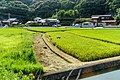 Paddy field in Wakayama City, Wakayama Prefecture; August 2016 (02).jpg