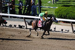 Palace Malice American-bred Thoroughbred racehorse
