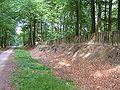 Palisadenwall Tiergarten Schloss Raesfeld.jpg