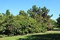 Parc interdépartemental des sports Plaine Nord à Choisy-le-Roi le 14 août 2017 - 001.jpg