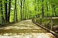 Parco-nazionale-del-gargano1.jpg