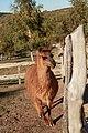 """Parcul de Animale - """"Moara de Vant"""" (8110012310).jpg"""