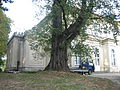 Park w Gumniskach, Tarnów - Gumniska (-) 5 pavw.JPG