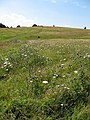 Parliament Hill Fields - geograph.org.uk - 559403.jpg