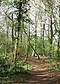 Path through the woods - geograph.org.uk - 1274916.jpg
