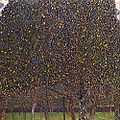 Pear Tree.jpg