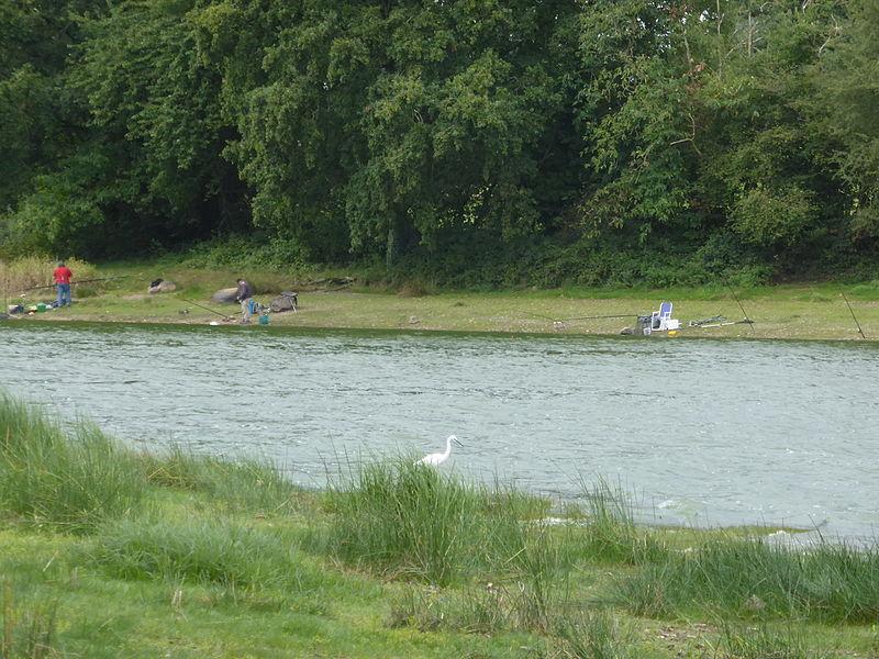 Etang de Châtillon en Vendelais (35): pêche, ornithologie (Espace naturel sensible)