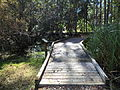 Pedestrian Bridge 2 at St Marks NWR.JPG
