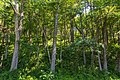 Perrot State Park Forest-Woods, Wisconsin (36530306186).jpg
