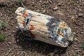 Petrified wood log with geode (ee0f475f-d37c-400b-b1a7-b2d5451a06b1).jpg