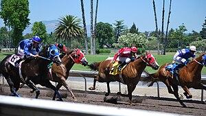 Alameda County Fairgrounds - Quarter Horse racing at Fairgrounds