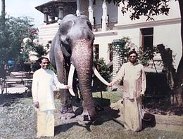 Photograph of Raja (elephant) with Hon.Ranasinghe Premadasa & Mr.Neranjan Wijeyeratne.jpg