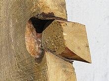 Un nodo in un legno di abete rosso.