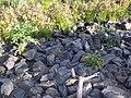 Piedras en la orilla - panoramio.jpg