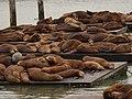 Pier 39 Seals - Focas - panoramio (1).jpg