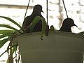Pigeons-Jerusalem.jpg