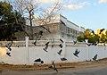 Pigeons (210782153).jpeg