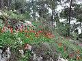 PikiWiki Israel 12718 Jerusalem forest.JPG