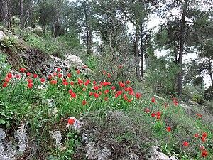Jerusalem Forest - Jerusalem Forest, 2011