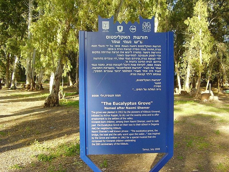 חורשת האקליפטוס על שם נעמי שמר
