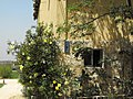 PikiWiki Israel 2246 wilhelma a Templar settlement in Israel וילהלמה - מושבה טמפלרית. היום- בני עטרות.jpg