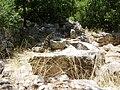 PikiWiki Israel 8753 hirbet danila.jpg