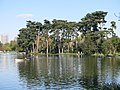 Pines on the bank of the inferior lake of the bois de Boulogne.jpg