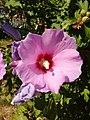 Pink Flower (169020831).jpeg
