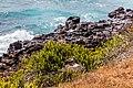 Piquero patiazul (Sula nebouxii), Punta Pitt, isla de San Cristóbal, islas Galápagos, Ecuador, 2015-07-24, DD 47.JPG