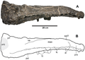 Plesiosuchus holotype.png