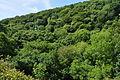 Plymbridge Woods south of Cann Viaduct (0138).jpg