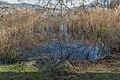 Poertschach Halbinselpromenade Schilfrohr am Seeufer 08122016 5545.jpg