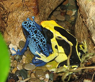 Poisonous amphibian - Poison dart frogs are well known for their brightly colored skin. The bright colors warn potential predators of their toxicity.