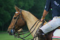 Polo horse clipped.jpg