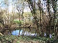 Pond at Iver Heath Nature Reserve - geograph.org.uk - 148514.jpg