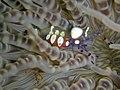 Popcorn Shrimp (234709149).jpg