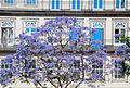 Porto, Portugal (29067734155).jpg