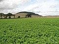 Potato field, Muirside - geograph.org.uk - 1434301.jpg